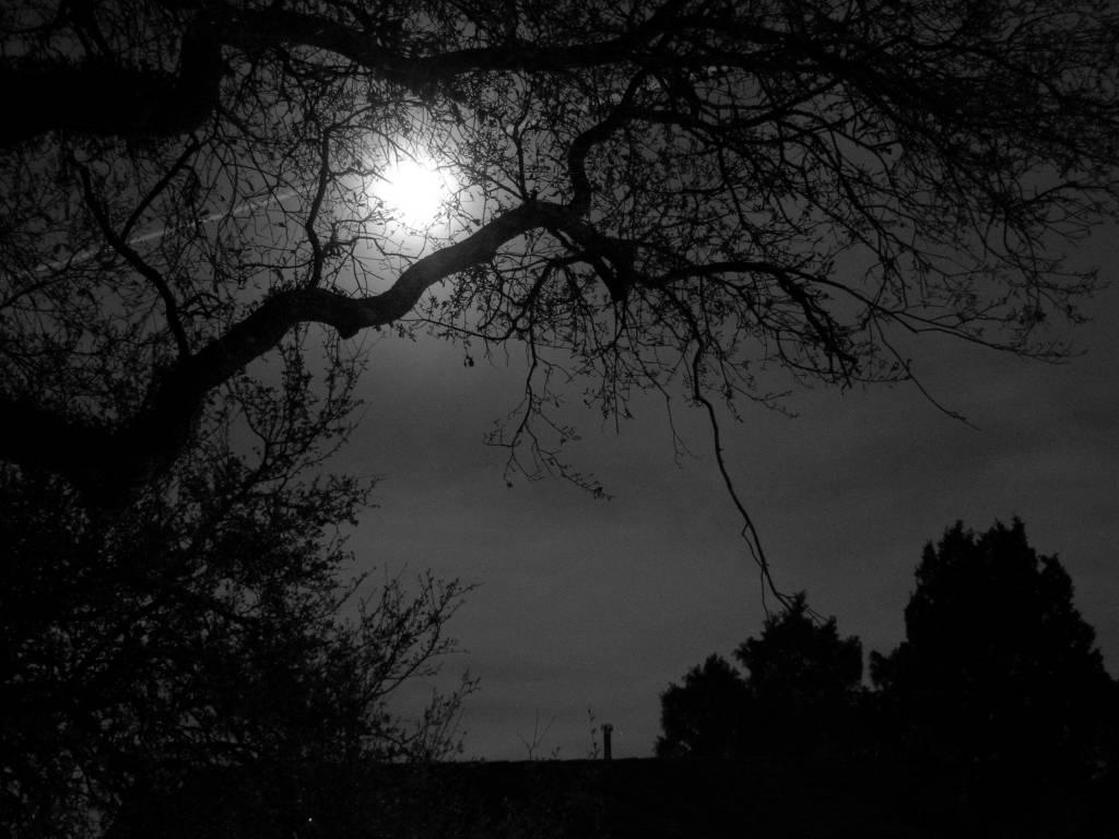 trees night moon blotch - photo #11